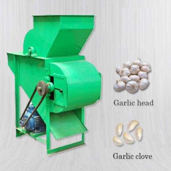 Garlic Bulb Cutter 100kg